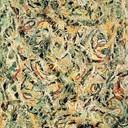 Jackson Pollock 9