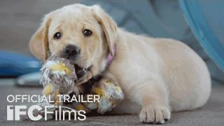 Pick of the Litter - Official Trailer I HD   Sundance Selects